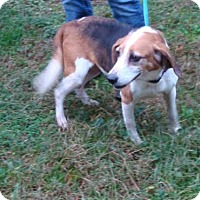 Adopt A Pet :: Elsa - Dumfries, VA