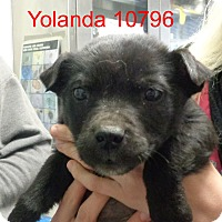 Adopt A Pet :: Yolanda - baltimore, MD