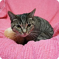 Adopt A Pet :: Willa - Mt Vernon, NY