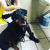 Adopt A Pet :: Griffin - Las Vegas, NV