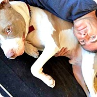 Adopt A Pet :: Apache is friendly! - Redondo Beach, CA