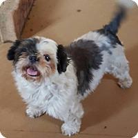 Adopt A Pet :: Liberty - Scottsboro, AL