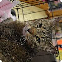 Adopt A Pet :: Captain - Ogden, UT