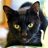 Adopt A Pet :: Sam - New Orleans, LA