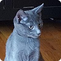 Adopt A Pet :: Cole - Elmwood Park, NJ