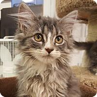 Adopt A Pet :: Cedar - Sheridan, WY
