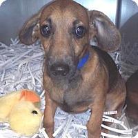 Adopt A Pet :: Charlie - Lakeland, FL