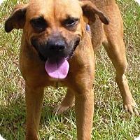 Adopt A Pet :: Hannah - Lebanon, ME