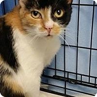 Adopt A Pet :: Fiji - San Bernardino, CA