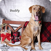 Adopt A Pet :: Buddy - Luling, LA