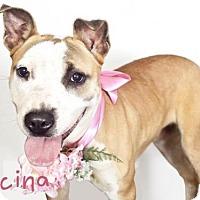 Adopt A Pet :: *LUCINA - Sacramento, CA