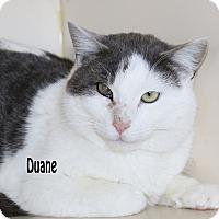 Adopt A Pet :: Duane - Idaho Falls, ID