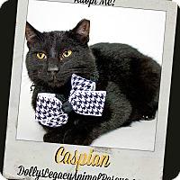 Adopt A Pet :: CASPIAN - Lincoln, NE