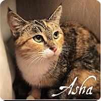 Adopt A Pet :: Asha - Vancouver, BC