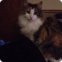 Adopt A Pet :: Cameron - Pittstown, NJ