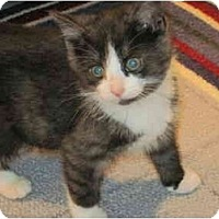 Adopt A Pet :: Pickle - Warren, OH