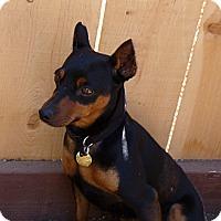 Adopt A Pet :: Beau - Oceanside, CA