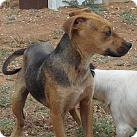 Adopt A Pet :: Morgan - Post, TX
