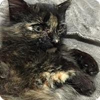 Adopt A Pet :: Mika - Modesto, CA