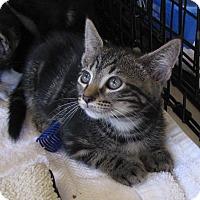 Adopt A Pet :: Robbie - bloomfield, NJ
