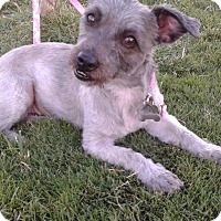 Adopt A Pet :: Nena - Las Vegas, NV