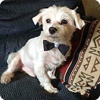 Adopt A Pet :: Jack - Hillsboro, IL