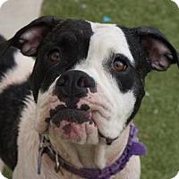 Adopt A Pet :: Mistletoe - Titusville, FL