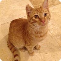 Adopt A Pet :: Miles - Apex, NC