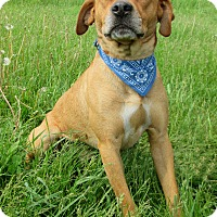Adopt A Pet :: SAWYER - New Manchester, WV