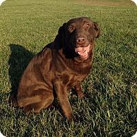 Adopt A Pet :: Tea - Towson, MD