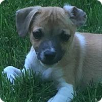 Adopt A Pet :: Wilbur (ETAA) - Hagerstown, MD