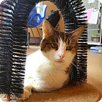 Adopt A Pet :: Stella - Salisbury, MA