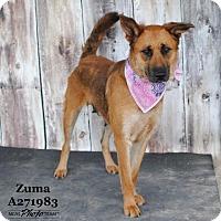 Adopt A Pet :: ZUMA - Conroe, TX