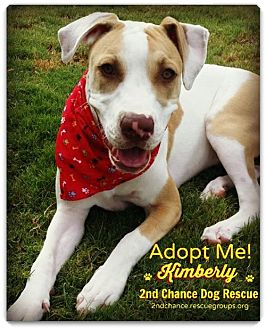Cattle Dog/Australian Cattle Dog Mix Puppy for adoption in Queen Creek, Arizona - Kimberly