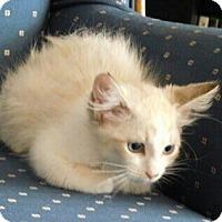 Adopt A Pet :: Morrison - Davis, CA