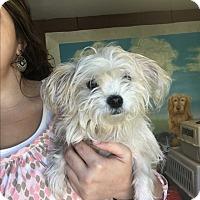 Adopt A Pet :: Fi Fi - Hazard, KY