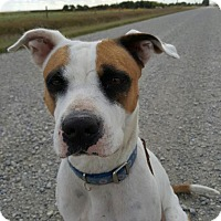 Adopt A Pet :: HELENA - Calgary, AB