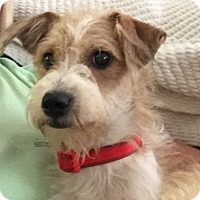 Adopt A Pet :: Chase - Plano, TX