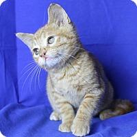 Adopt A Pet :: Biscuit - Winston-Salem, NC