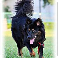 Adopt A Pet :: Meli - San Mateo, CA