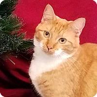 Adopt A Pet :: Ivy - Colfax, IA