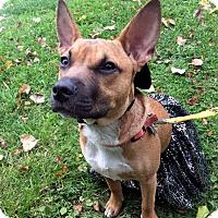 Adopt A Pet :: Tater Tot-Adopted! - Detroit, MI