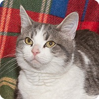 Adopt A Pet :: Paisley - Elmwood Park, NJ