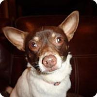 Adopt A Pet :: Rebel - Warrenton, NC