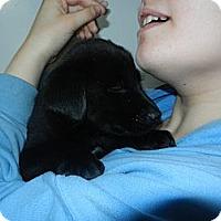 Adopt A Pet :: Sue - South Jersey, NJ