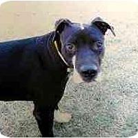Adopt A Pet :: Mumbo - Scottsdale, AZ