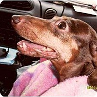 Adopt A Pet :: Sara Jean - Vale, OR