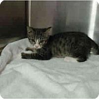 Adopt A Pet :: Ella - Mission, BC