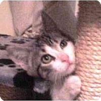 Adopt A Pet :: Stevie - Island Park, NY