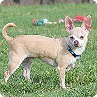 Adopt A Pet :: Penelope - Homewood, AL